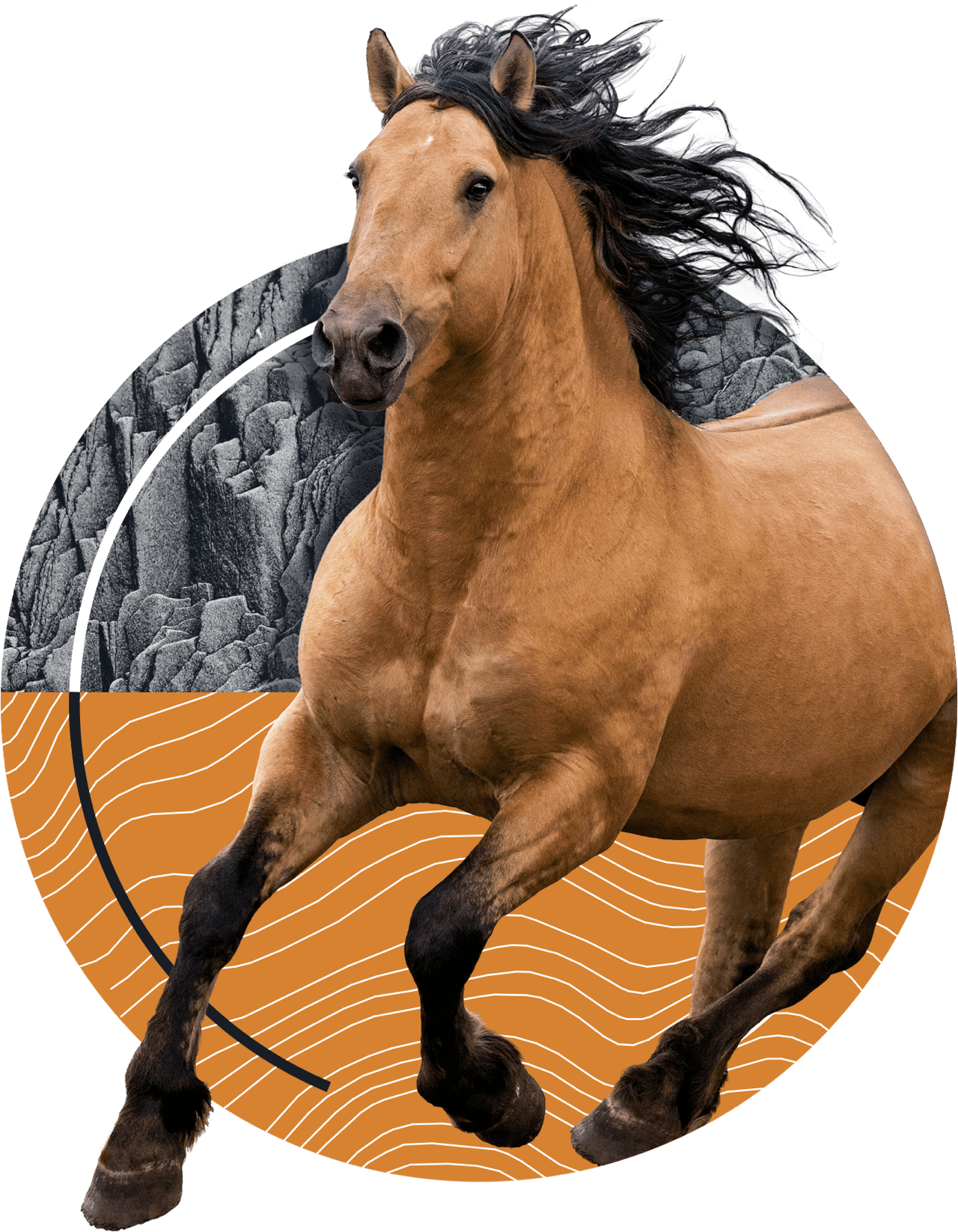 s2_horse.png